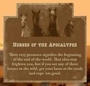 A horses