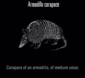 Animals Armadillo Carapace