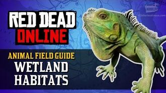Red Dead Online - Wetland Habitats Animal Locations Guide Naturalist Role