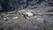 RDR2 POI 44 Whale Bones 02