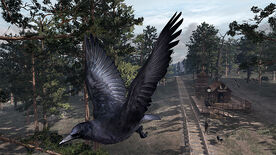 Wildlife crows