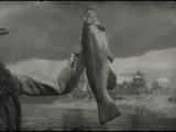 Legendary Bullhead Catfish