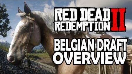 Red Dead Redemption 2 Horses - Belgian Draft Overview