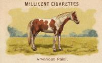 Horses Card American Paint
