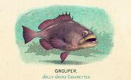 Fauna of America Grouper