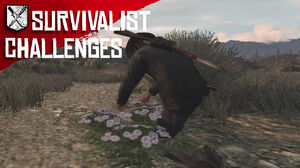 Rdr survivalist challenges