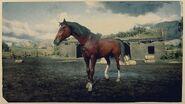 Arabian 3