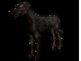 Undead Dog