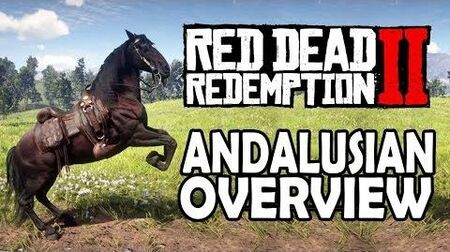 Red Dead Redemption 2 Horses - Andalusian Overview