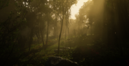 Jungles in Guarma