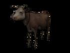 Vaca23