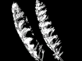 Songbird Feathers