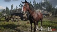 RDR2 Horses Thoroughbred BloodBayThoroughbred 2-2659-1080