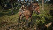 RDR2 Ardennes Brown Jack 2