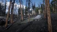 RDR2 POI 46 Brush Fire 03