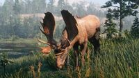 Moose screenshot - Red Dead Redemption 2