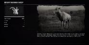 SheepDesertProfileRDR2