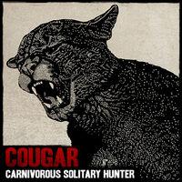 Wildlife cougar
