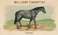 Horses Card Nokota