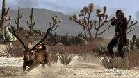 Huntingtrading jackalope