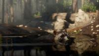 Raccoon-RDR2