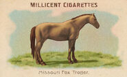 Horses Card Missouri Fox Trotter