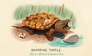 Fauna of America Snapping Turtle