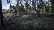 RDR2 POI 46 Brush Fire 02