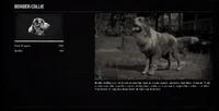 DogCollieProfileRDR2