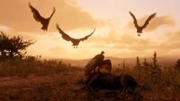 Turkey Vulture screenshot - Red Dead Redemption 2