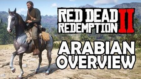 Red Dead Redemption 2 Horses - Arabian Overview