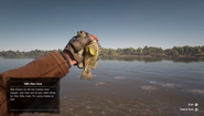 RDR2 - Rock Bass