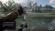 RDR2 - Legendary Chain Pickerel