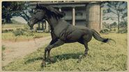 Arabian 1