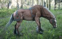 Rdr2-belgian draft horse-chestnut