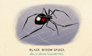 Fauna of America Black Widow Spider
