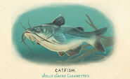 Fauna of America Catfish