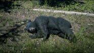 Dead Black Bear RDR 2