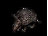 Armadillo (Animal)