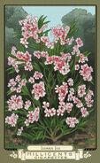 Oleander sage RDR2 CigaretteCards