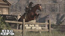 Wildlife.horsejump