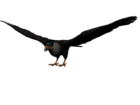Aguila mexicano