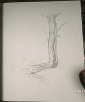 RDR2 POI 40 Trail Trees (IV) 02