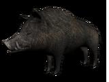 Wilbur the Boar