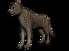 Khan el jaguar