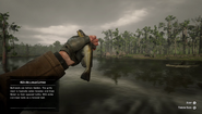 RDR2 - Bullhead Catfish