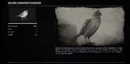 SparrowGoldenRDR2