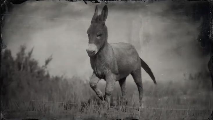 Donkey (RDR 2)   Red Dead Wiki   FANDOM powered by Wikia