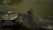 RDR2 - Channel Catfish 02