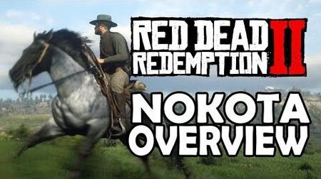 Red Dead Redemption 2 Horses - Nokota Overview